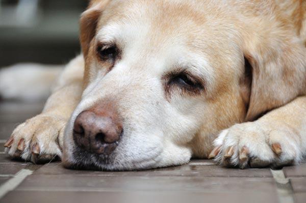 犬の下痢の原因って?