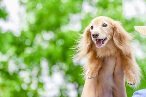 犬の肝臓病ってどんな病気?