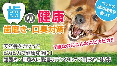 歯磨き・デンタルケア・口臭予防