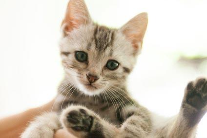猫の腎臓病ってどんな病気?