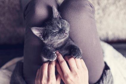 猫のツボを優しくマッサージ