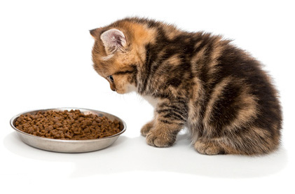 腎臓病の猫にはリンやナトリウムを抑えた食事を与えましょう