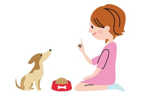 愛犬に消化吸収の良い食事を心がけましょう。