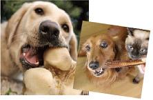 犬の心臓病の原因の一つに歯周病菌が疑われています